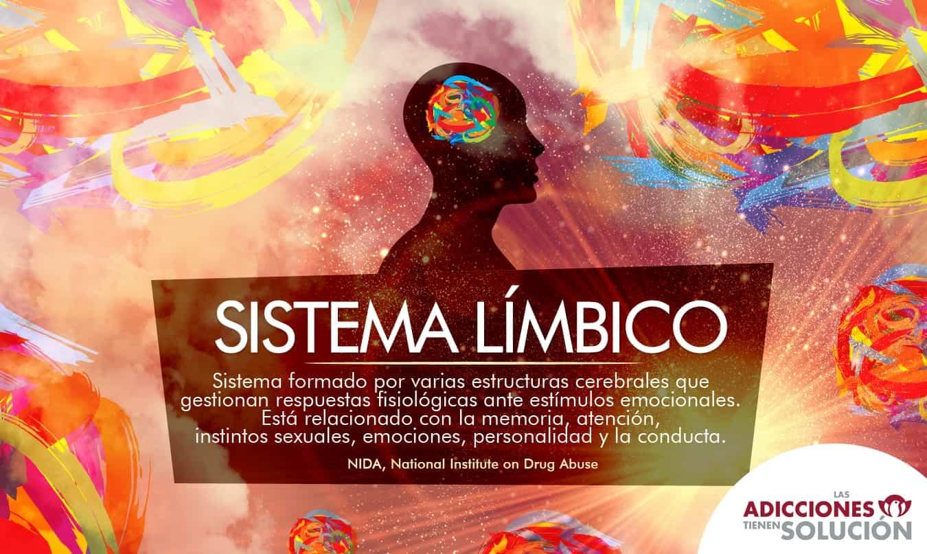 sistema límbico MONTE