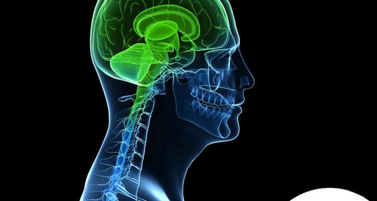de-que-depende-un-cerebro-saludable