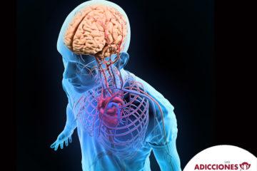 el-sistema-nervioso-tiene-subsistemas