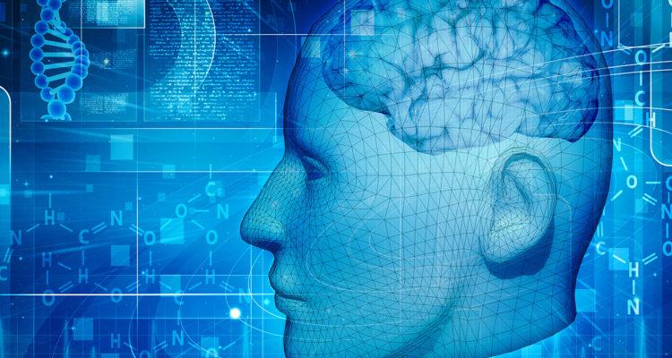 desarrollo-evolutivo-del-cerebro